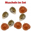 8 x Kerzen im Top-Muschel Design, Neuware, Wachskerzen Weihnachten,OVP